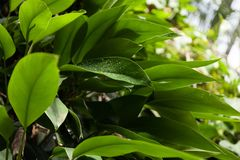 Tropical forest plants growing in the wild.  stock photos