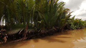 Tropical forest river boat trip on Mekong Delta stock video footage