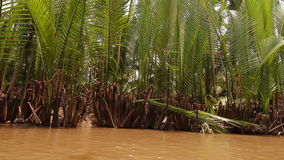 Tropical forest river boat trip on Mekong Vietnam stock footage