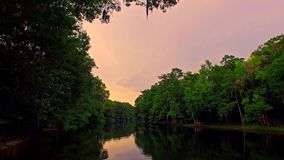 Tropical forest river at sunset on a quiet evening. Slow, relaxing flythrough of a tropical forest river at sunset on a calm, quiet evening with green trees on stock video footage