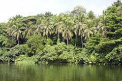 Tropical forest. By the river, Villa Escudero, Candeleria, Philippines Stock Image