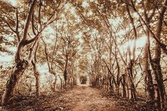 Forest of the Gili Trawangan, Indonesia. Royalty Free Stock Photo