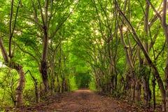 Forest of the Gili Trawangan, Indonesia. stock photo