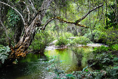 Tropical Forest. Small river and tropical forest in northern Laos Stock Images