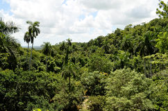Tropical forest (Soroa, Cuba). View of the tropical rainforest in the Biosphere Reserve of Sierra del Rosario (Soroa, Pinar del Rio, Cuba Royalty Free Stock Photos