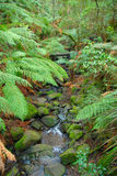 Tropical forest stream. Stock Image