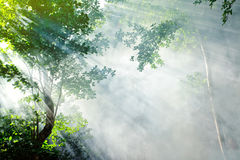 Tropical forest sunbeam Stock Images