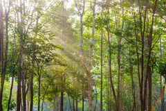 A tropical forest with sunshine Royalty Free Stock Image