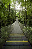 Tropical Forest Suspension Bridge Royalty Free Stock Photography