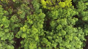 Tropical forest. Top view. Aerial. Thailand. stock footage