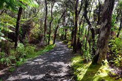 Tropical forest trail in Volcanoes National Park, Big Island of Hawaii. Trail through the tropical forest in Volcanoes National Park, Big Island of Hawaii Stock Photography