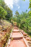 Tropical forest in Valle de Mai with footpath, Praslin, Seychell. Es stock photography