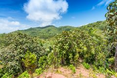 Tropical forest in Valle de Mai, Praslin, Seychelles.  royalty free stock photography