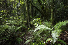 Tropical forest vegetation Stock Photography