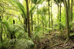 Tropical forest vegetation Stock Photos