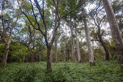 Tropical Forest Vegetation Royalty Free Stock Images