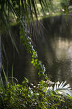 Tropical forest view stock photography