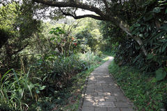Tropical forest walkway Royalty Free Stock Images