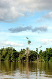Tropical forests. On the river Royalty Free Stock Photography
