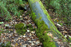 Tropical forests, moss on tree roots Stock Images