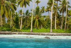 Tropical forests,palm trees on beach in the colombia,America Sur Royalty Free Stock Photos