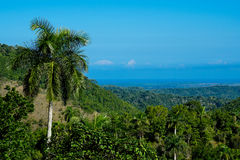 Tropical Forrest with palms Stock Images