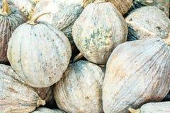 Tropical frais de potiron Image stock