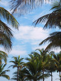 Tropical frame. Palm tree branches create tropical-themed frame Stock Photography