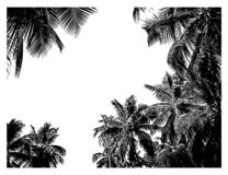 Tropical frame of coconut palm trees. Jungle banner. Tropical frame of realistic silhouettes of coconut palm trees. Sketch botanical vector illustration. Jungle vector illustration