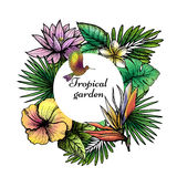 Tropical Frame Design Stock Photos
