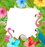Tropical Frame Made in Beautiful Plants Royalty Free Stock Image