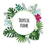 Tropical frame, template with place for text. Vector illustration, isolated on white. Round tropical frame, template with place for text. Vector illustration Royalty Free Stock Image