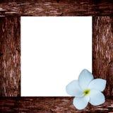 Tropical frangipani flower and wood frame Royalty Free Stock Photo