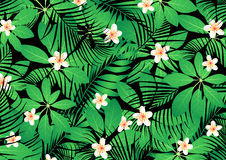 Tropical frangipani flowers on green leaves Royalty Free Stock Images