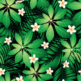 Tropical frangipani seamless pattern with palm leaves Stock Photos