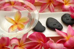 Tropical frangipani in the spa Stock Photos