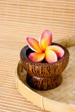 Tropical Frangipani for spa and wellness. Tropical Frangipani in wooden bowl for spa and wellness concept Stock Images