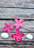 Tropical frangipani on weathered wood Stock Photo