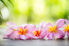 Tropical Frangipani on wooden table for spa concept Royalty Free Stock Photo