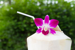 Tropical fresh coconut cocktail decorated purple orchid Stock Photos