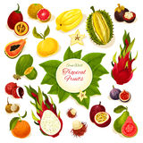 Tropical fresh fruits vector poster. Tropical fruits poster of vector whole and sliced juicy fruits durian and carambola, dragon fruit and guava, lychee and Royalty Free Stock Photo