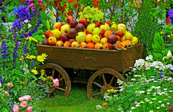 Tropical fresh fruits in wooden cart Stock Images