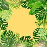 Tropical green leaves Stock Photography