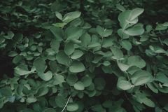 Tropical fresh green leaves pattern as textured and background royalty free stock images