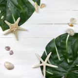 Tropical fresh green monstera leaves and seashells on white wood royalty free stock photography