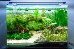 Tropical freshwater fish tank Royalty Free Stock Image
