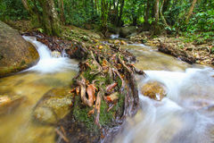 Tropical freshwater stream in forest Royalty Free Stock Images