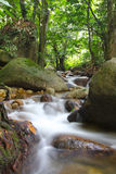 Tropical freshwater stream in rainforest Stock Photo