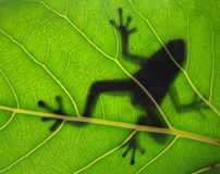 Tropical Frog Silhouette Stock Images