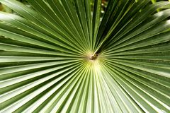 Tropical Fronds. A tropical plant next to the pool near Dickenson Bay, Antigua Stock Image